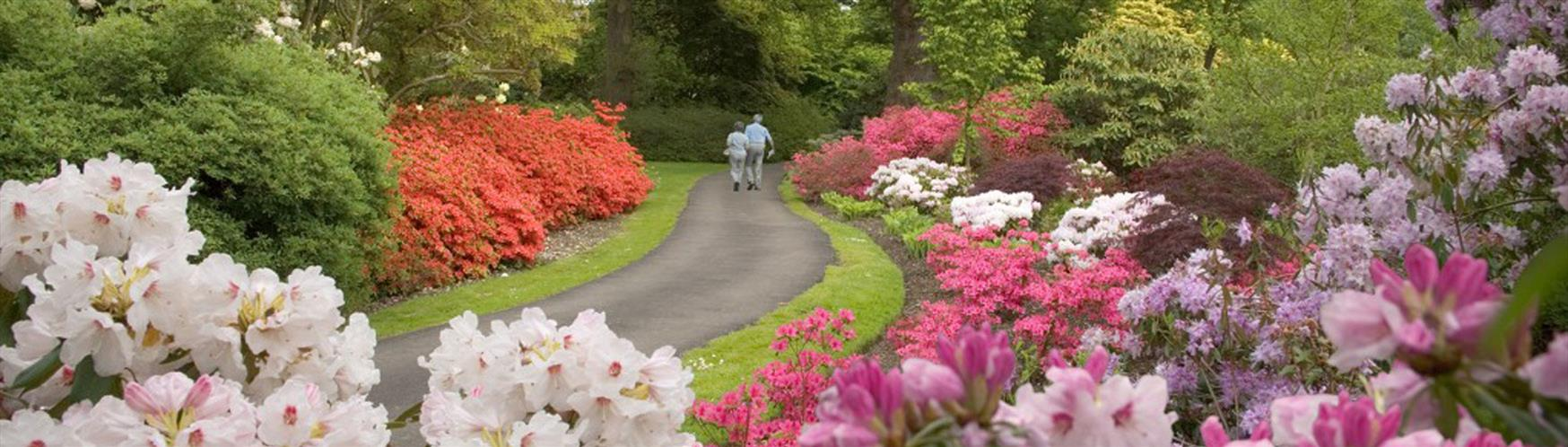 10 places to find the best spring flowers in surrey visit surrey the savill garden is pretty special place in spring enjoy spring flowers mightylinksfo