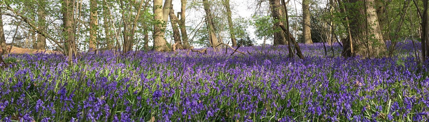 10 places to find the best spring flowers in surrey visit surrey enjoy spring flowers mightylinksfo