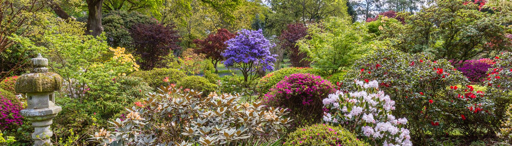 10 Places To Find The Best Spring Flowers In Surrey Visit Surrey