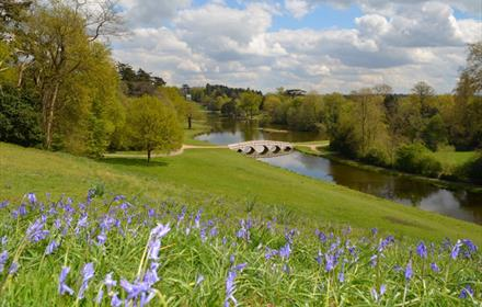 Bluebells in spring at Painshill