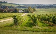 Thumbnail for Denbies Wine Estate