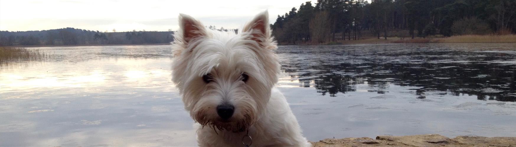 Dog Friendly Hotels In Farnham Surrey