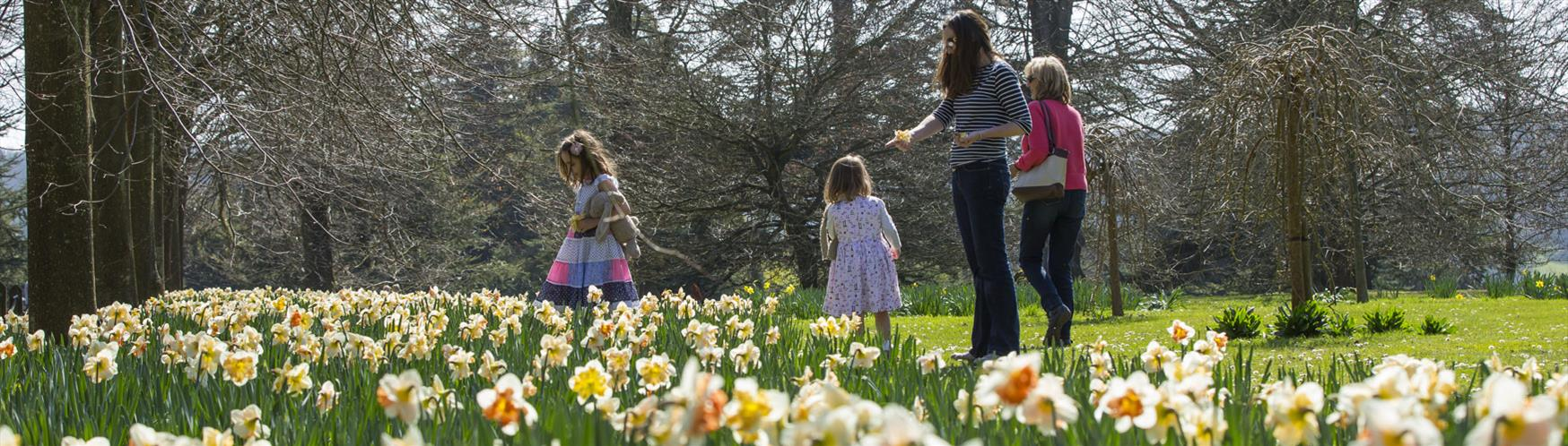 Enjoy a springtime stroll in a garden