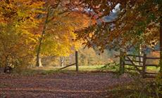 Thumbnail for Autumn colour with the National Trust in Surrey