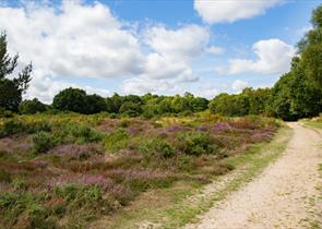 Headley Heath
