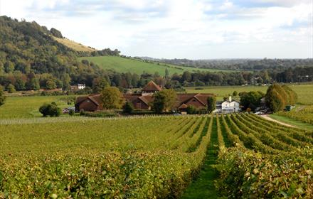 Complimentary Denbies Vineyard Tour at  at 10am and 11am for Surrey residents