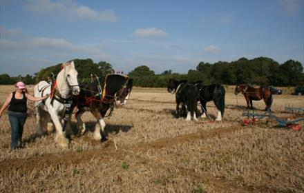 Plough Match at Loseley Park