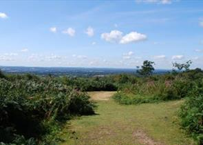 Limpsfield Common