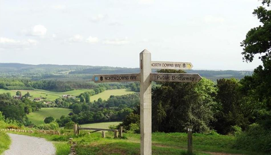 North Downs Way at Newlands Corner