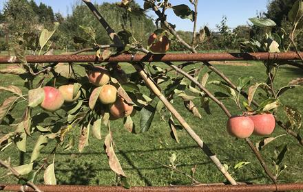 Orchard Day at Gatton Park