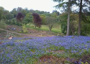 Chart Park, near Dorking Surrey