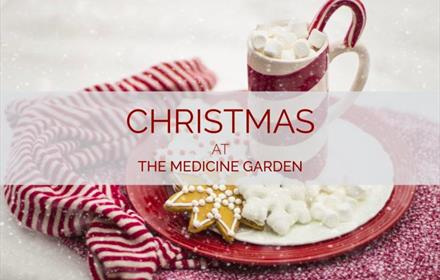 Christmas Grotto at The Medicine Garden