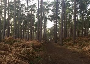 Ockham and Wisley Common
