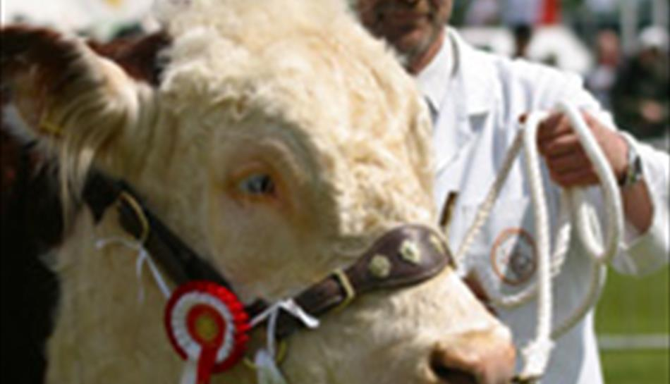 Surrey Country Show